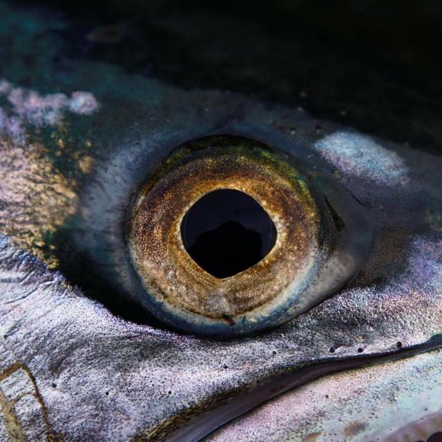 Auge Erkennt Ihr den Fisch? dichtamfisch fisch fisheye beauty augehellip
