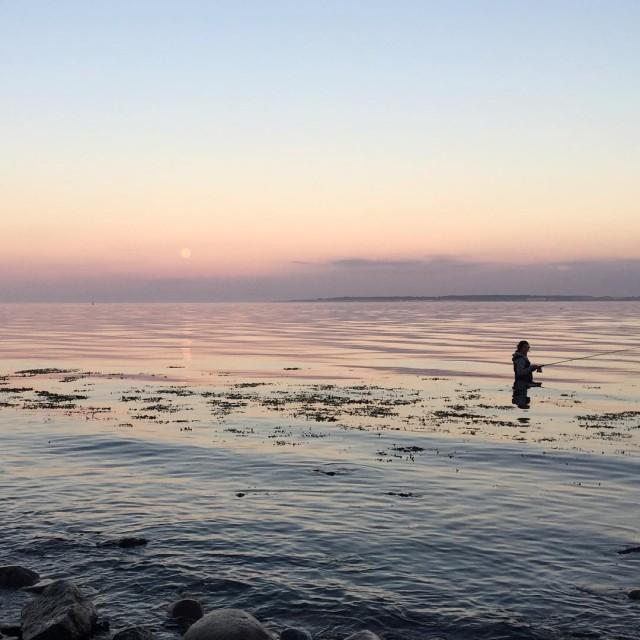 Live vom Wasser Gru in die Runde! dichtamfisch nofilter meerforellehellip