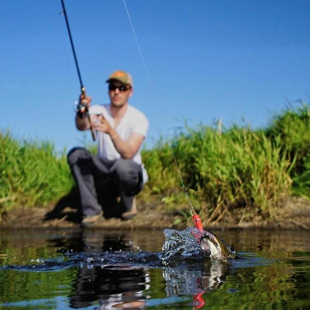 Quit nice pike shot dichtamfisch fishingdenmark esox hecht snoek gddahellip