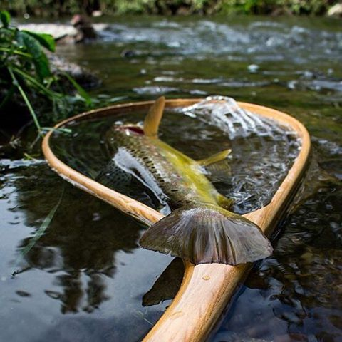 Fishwaterpicture by Robin dichtamfisch trout brownie instafish fishpicoftheday fishing bafohellip