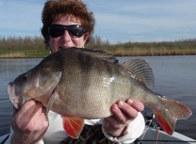 Angeln in holland kapitale barsche und gute zander for Fisch barsch