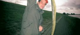 strammer Aal aus der Elbe