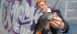 schöner Barsch beim Streetfishing