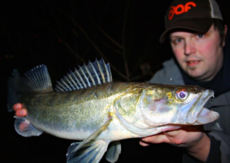 starker Biss - halbstarker Fisch