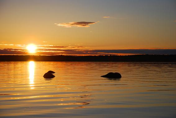 Traumhafte Kulisse - Sonnenuntergang in Schweden