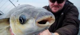 Meeräschen sind schon urige Fische