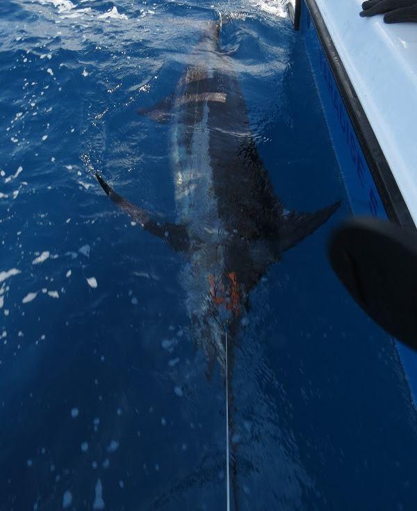 Marlin kurz vor der landung