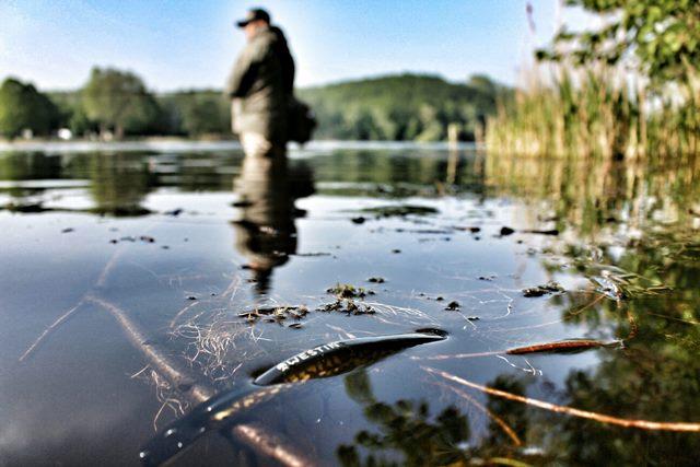 Esox Fischen Früjahr