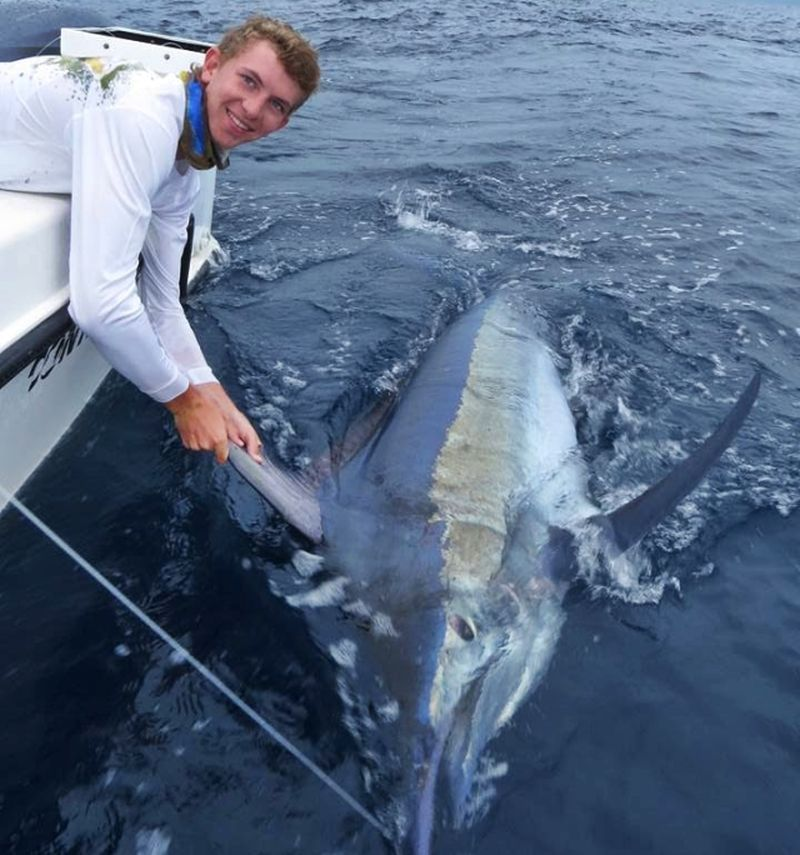 500 LB Black Marlin