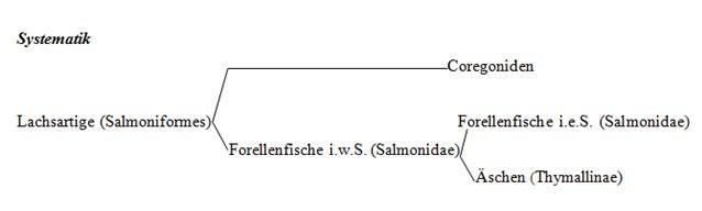 Systematik_Salmoniden