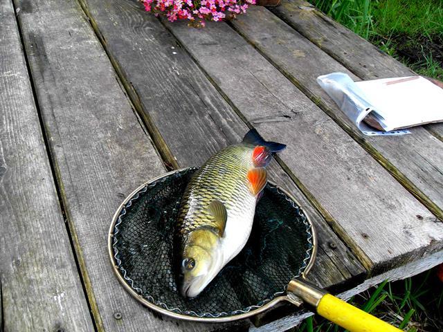 E-Fischen Warnow