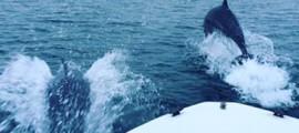 delfine_anzeige