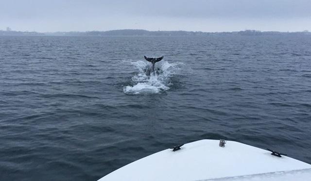 Delfin Ostsee