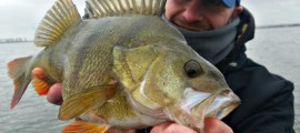perch_fishing_nederlands
