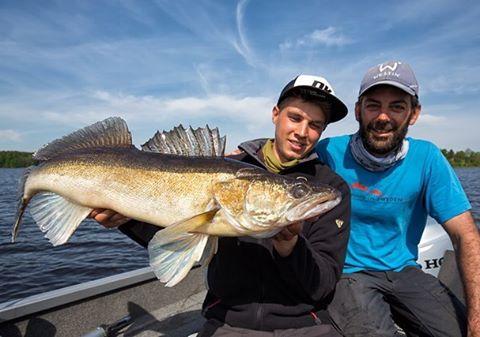 Schweden 16 Pelagischer Zander mit Henrik von fishinginsweden Der Berichthellip