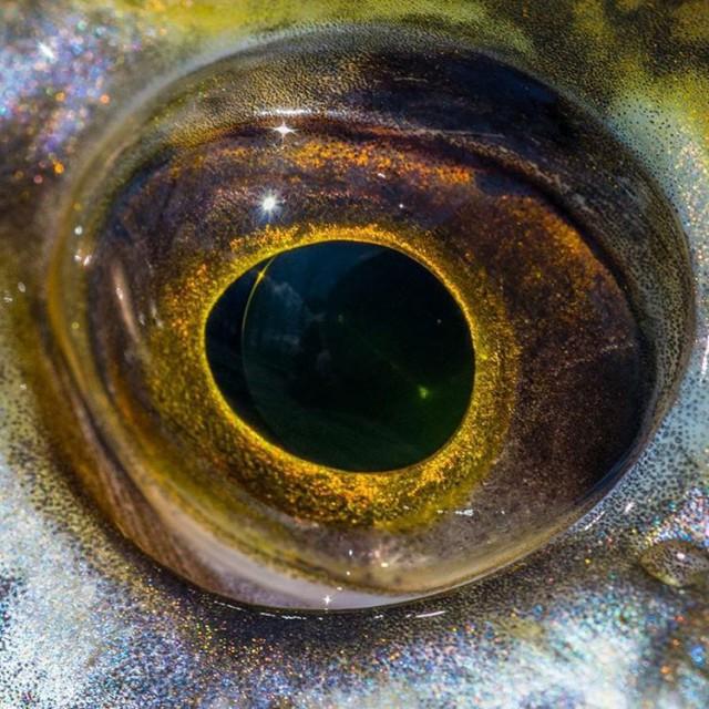 Auge! Welcher Fisch? dichtamfisch mitauge eye fisheye makro closeup fischaugehellip