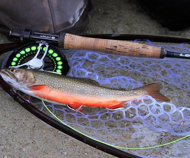 Einer von diversen schicken Fischen die bei lotteintheloop im sterreichhellip