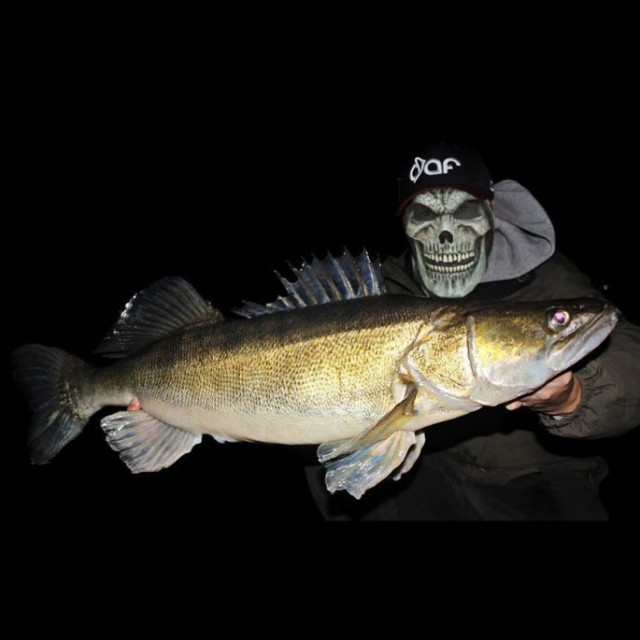 Happy Halloween dichtamfisch dafstuff halloween monster fish instafish zander walleyehellip